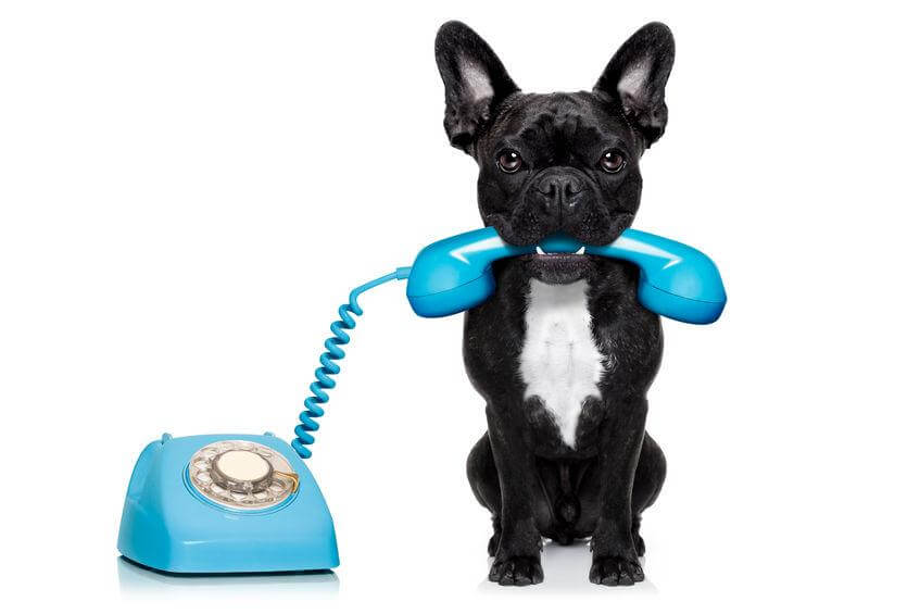 Dog answering the phone?